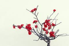κόκκινο δαμάσκηνων ανθών στοκ εικόνα