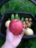 κόκκινο εκμετάλλευσης χεριών μήλων Στοκ φωτογραφία με δικαίωμα ελεύθερης χρήσης