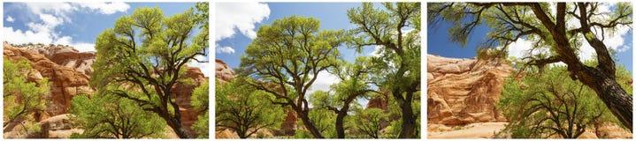 Κόκκινο ερήμων κολάζ λόφων του Utah διαβρωμένο δέντρα Στοκ Εικόνες