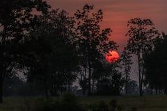 Κόκκινο ηλιοβασίλεμα στο τροπικό δάσος Στοκ Εικόνες