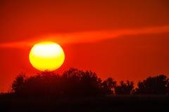 Κόκκινο ηλιοβασίλεμα μέσω της βλάστησης με έναν μεγάλο ήλιο Στοκ εικόνα με δικαίωμα ελεύθερης χρήσης