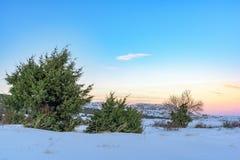 Κόκκινο ηλιοβασίλεμα στο χιονισμένο τομέα με τα δέντρα ιουνιπέρων Ρωσία, Stary Krym Στοκ εικόνα με δικαίωμα ελεύθερης χρήσης
