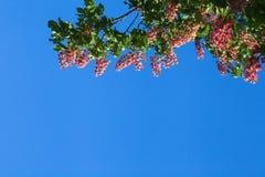 Κόκκινο κάστανο ενάντια Στοκ Φωτογραφία