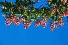 Κόκκινο κάστανο ενάντια Στοκ φωτογραφία με δικαίωμα ελεύθερης χρήσης