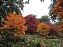 Κόκκινο, κίτρινο πορτοκαλί δέντρο Στοκ φωτογραφίες με δικαίωμα ελεύθερης χρήσης