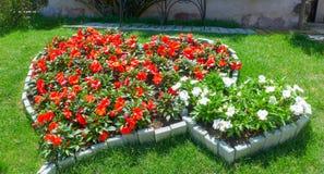 Κόκκινο και άσπρο λουλούδι Στοκ εικόνες με δικαίωμα ελεύθερης χρήσης