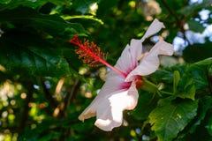 Κόκκινο και άσπρο λουλούδι στοκ φωτογραφίες με δικαίωμα ελεύθερης χρήσης