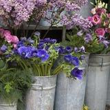 Κόκκινο και μπλε λουλούδι άνοιξη Στοκ Εικόνα