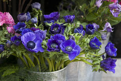 Κόκκινο και μπλε λουλούδι άνοιξη: anemones, ranoncullus και Στοκ φωτογραφία με δικαίωμα ελεύθερης χρήσης