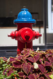 Κόκκινο και μπλε στόμιο υδροληψίας πυρκαγιάς που εγκαθίσταται στην πρωτεύουσα του Καναδά, Οττάβα Στοκ Φωτογραφίες