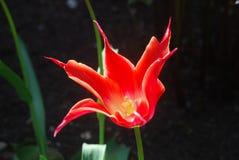 Κόκκινο και λουλούδι Στοκ φωτογραφία με δικαίωμα ελεύθερης χρήσης