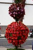 Κόκκινο και πορφυρό anthurium Στοκ Φωτογραφίες