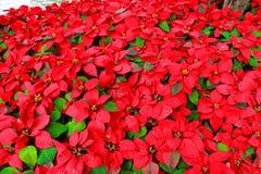 Κόκκινο και πράσινος Στοκ Φωτογραφία