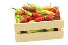 Κόκκινο και πράσινο annuum ` πιπεριών rawit μάτι ` πουλιών ` s καψικού Στοκ Φωτογραφία