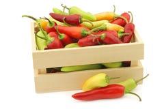 Κόκκινο και πράσινο annuum ` πιπεριών rawit μάτι ` πουλιών ` s καψικού Στοκ Φωτογραφίες