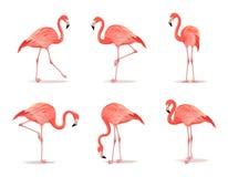 Κόκκινο και ρόδινο σύνολο φλαμίγκο, διανυσματική απεικόνιση Το δροσερό εξωτικό πουλί σε διαφορετικό θέτει τα διακοσμητικά στοιχεί ελεύθερη απεικόνιση δικαιώματος