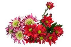 Κόκκινο και ρόδινο λουλούδι χρυσάνθεμων ανθοδεσμών Στοκ Εικόνες