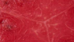 κόκκινο καρπούζι φετών απόθεμα βίντεο