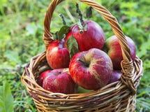 Κόκκινο καλάθι μήλων φθινοπώρου Στοκ εικόνα με δικαίωμα ελεύθερης χρήσης