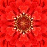 Κόκκινο κεντρικό καλειδοσκόπιο λουλουδιών Mandala ομόκεντρο Στοκ εικόνα με δικαίωμα ελεύθερης χρήσης