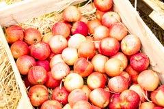 κόκκινο κιβωτίων μήλων Στοκ φωτογραφία με δικαίωμα ελεύθερης χρήσης