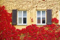 κόκκινο κισσών Στοκ εικόνες με δικαίωμα ελεύθερης χρήσης