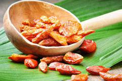 κόκκινο κουτάλι πιπεριών τσίλι καυτό ξύλινο Στοκ Φωτογραφίες