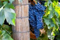 κόκκινο κρασί εκκινητών ε&x Στοκ φωτογραφία με δικαίωμα ελεύθερης χρήσης