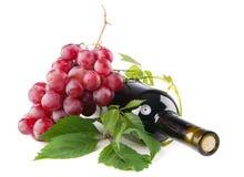 κόκκινο κρασί σταφυλιών μ&pi Στοκ Εικόνες