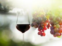 κόκκινο κρασί σταφυλιών στοκ εικόνες
