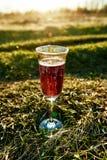 Κόκκινο κρασί στο γυαλί σε ένα πικ-νίκ πράσινη χλόη στο θολωμένο υπόβαθρο στοκ φωτογραφία με δικαίωμα ελεύθερης χρήσης