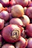 κόκκινο κρεμμυδιών Στοκ φωτογραφία με δικαίωμα ελεύθερης χρήσης
