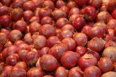 κόκκινο κρεμμυδιών Στοκ Εικόνα