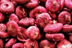 Κόκκινο κρεμμύδι στο κατάστημα οδών Στοκ Εικόνες