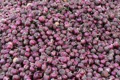 Κόκκινο κρεμμύδι συγκομιδών Στοκ Φωτογραφία