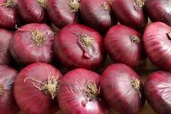 Κόκκινο κρεμμύδι Στοκ εικόνα με δικαίωμα ελεύθερης χρήσης