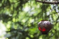 Κόκκινο κρεμώντας φανάρι Στοκ φωτογραφία με δικαίωμα ελεύθερης χρήσης