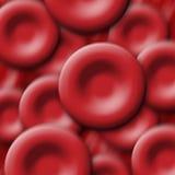 κόκκινο κυττάρων αίματος Στοκ Φωτογραφίες