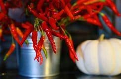 Κόκκινο κόκκινο πιπέρι Στοκ φωτογραφίες με δικαίωμα ελεύθερης χρήσης
