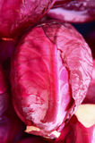 κόκκινο λάχανων Στοκ Φωτογραφία