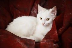 κόκκινο λευκό γατακιών υφάσματος Στοκ εικόνες με δικαίωμα ελεύθερης χρήσης