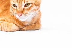 κόκκινο λευκό γατών ανασκόπησης Στοκ φωτογραφία με δικαίωμα ελεύθερης χρήσης