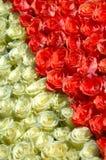κόκκινο λευκό τριαντάφυλλων Στοκ φωτογραφία με δικαίωμα ελεύθερης χρήσης