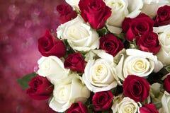 κόκκινο λευκό τριαντάφυ&lambd Στοκ Εικόνες