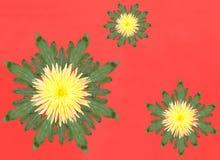 κόκκινο λουλουδιών ανασκόπησης Στοκ φωτογραφίες με δικαίωμα ελεύθερης χρήσης