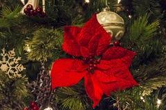 κόκκινο λουλουδιών Χρι& Στοκ Φωτογραφίες
