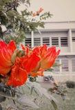 κόκκινο λουλουδιών στοκ εικόνες