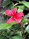 Κόκκινο λουλούδι άνθισης Στοκ φωτογραφία με δικαίωμα ελεύθερης χρήσης