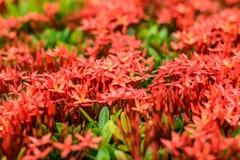 Κόκκινο λουλούδι ακίδων στοκ φωτογραφίες
