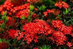 Κόκκινο λουλούδι ακίδων στοκ φωτογραφία με δικαίωμα ελεύθερης χρήσης